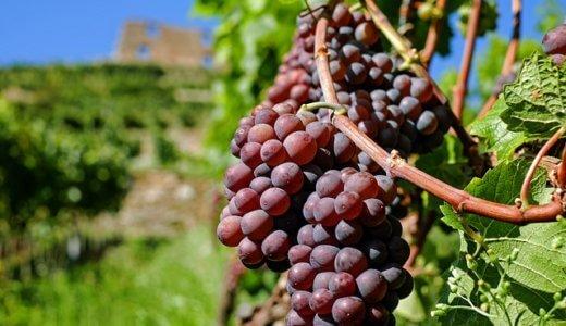 【入門編】ワイン初心者にはコノスル飲み比べがおすすめ|安旨チリワイン
